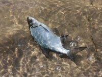 Абаканский суд разрешил рыбачить на хакасских озерах бесплатно