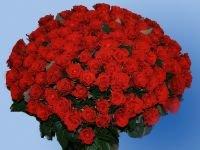 Пьяного грабителя цветочного павильона приговорили к лишению свободы