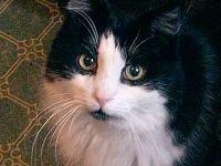 Закон о тишине уравняет мяуканье кошек и тяжелый рок
