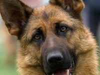 Право на возмещение вреда от укуса собаки признано краевым  судом