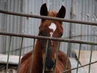Суд разрешил спор автовладелицы и хозяина лошади