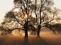 Назаровские чиновники ответят за короткую жизнь 1700 деревьев