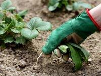 На территории края торговали запрещенными пестицидами