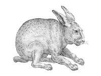 В Хакасии задержали вора-рецидивиста, похитившего 11 кроликов
