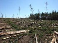 Лес продолжают рубить незаконно,но ловят преступников теперь чаще