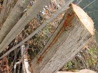 Двое лесничих из Абанского района края осуждены за вымогательство