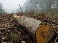Красноярский поставщик леса ответит за контрабанду и уклонение от платежей
