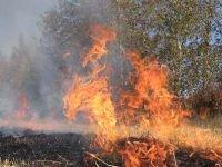 Поджигателя травы отправили на обязательные работы из-за двух десятков сгор