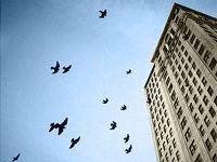 Красноярцу, учившему людей летать, прокуратура закрыла небо