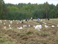 Краевой суд запретил выращивать овощи в ядовитой земле