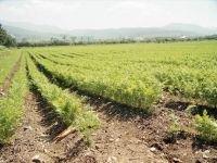Тувинского земельного мошенника отправили за решетку на 2 года