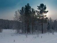 Хакасские чиновники отдали под геоизыскания защитные леса