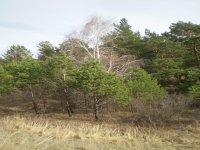 """""""Золотая горка"""" сразится в апелляции за возможность построить дачи в лесу"""