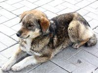 Эвенкийская прокуратура воюет с собаками, пока из бюджета исчезают миллионы