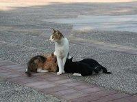 Возбуждено дело по непроведенной эвтаназии бездомных кошек на 1,6 млн руб.