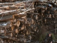 Гражданка Китая ответит за контрабанду леса на 20 млн руб.