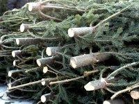 ГУ МВД: новогодним лесорубам грозят штрафы и уголовная статья