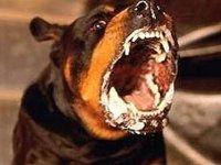 Жертва нападения собаки взыскала с владельца пса моральный вред