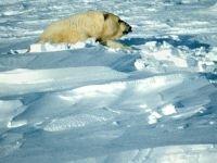 Охрана Арктики - дело государственное