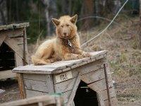 Пять тысяч рублей загнали должника в собачью конуру