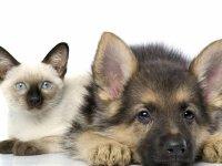 Налоговики не знают, как собирать налог на домашних животных, если его введут