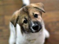 Житель Красноярского края заплатит 2 тыс. руб. за убитую псом дворнягу