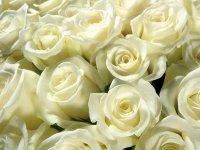 """СИП объяснил, почему соцсеть не должна платить правообладателю за песню """"Букет из белых роз"""""""