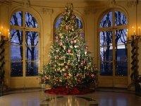 Счетную палату страны попросят проверить стоимость новогодних елок Краснояр