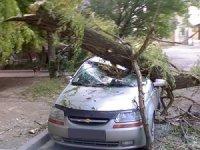 Коммунальщики заплатят более 150 000 руб. за упавшее на авто дерево