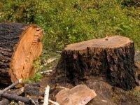 За не поставленный на учет пункт отгрузки древесины компания заплатит 100 т