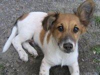 Мать ребенка, испуганного собакой, отсудила у краевых властей 15 000 руб.