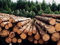 Дремучий лес: суды обязали предпринимателя заключить договор в прошлом
