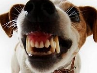 Хозяин собаки, которая напала на дочку соседки в подъезде, выплатит 40000 руб. компенсации