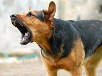 В Красноярске утвердили правила отлова бродячих собак