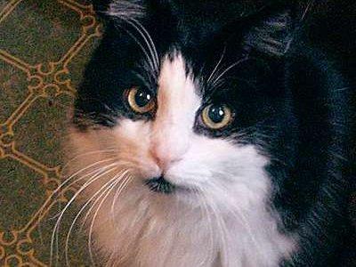 Жилец коммуналки, убивший соседского кота, осужден по отпечаткам пальцев на ноже