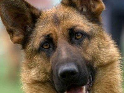 Хозяйка больного щенка отсудила у заводчика почти всю его стоимость