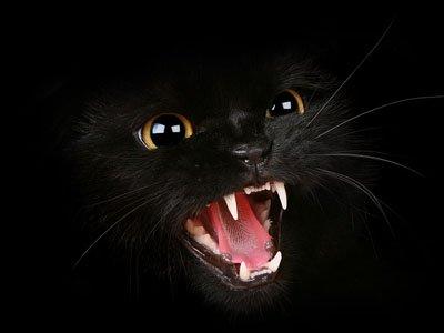 Во ФСИН проверяют, расстреливали ли охранники колонии с вышек бродячих котов