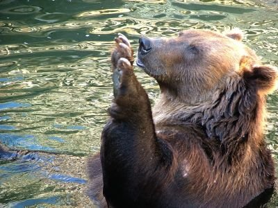 Пропавший в тайге заключенный бежал от медведя, а не из колонии