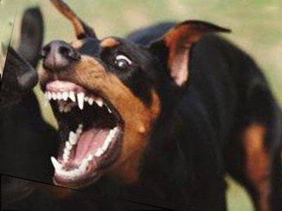 Американец, покусанный собакой, требует сумму с 36 нулями в качестве компенсации