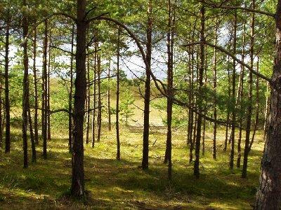 Доработаны типовые договоры аренды лесных участков, которые должны снизить количество судебных споров