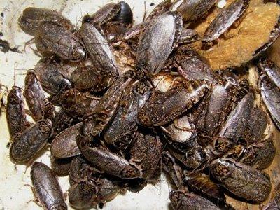В здании Таганского суда Москвы протестующие выпустили 3,5 тысячи тараканов