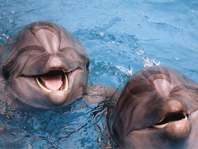 """Оштрафован владелец дельфинов, танцевавших под саундтреки из фильмов """"Гладиатор"""" и """"Пираты Карибского моря"""""""