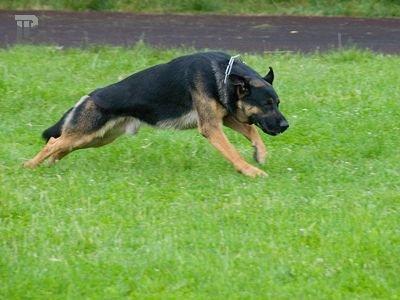 Верховный суд США запретит служебным собакам обнюхивать дома американцев