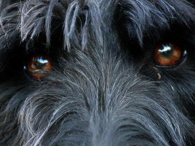 Задержаны налетчики, державшие в своем доме более 70 похищенных собак элитных пород