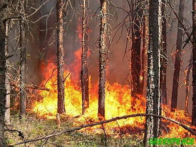 Полиция не нашла следов поджога в лесах края