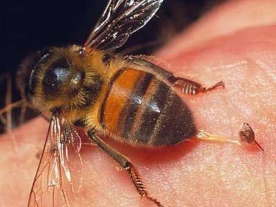 """Суд обязал владельца пасеки выплатить 12000 руб. соседу за """"аллергическую реакцию"""" на укусы пчел"""