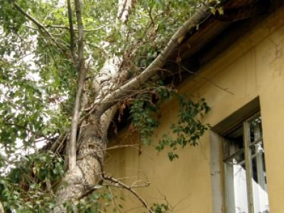 Женщина, на которую упала верхушка дерева, отсудила у коммунальщиков 1 млн руб.