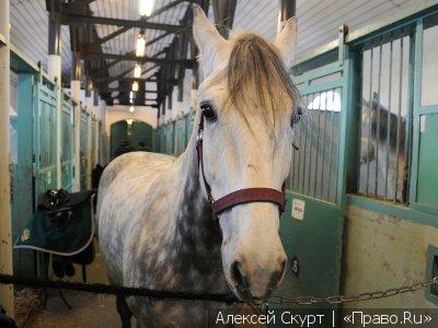 Москвичка, упавшая с лошади, отсудила у конного клуба 1,4 млн руб. компенсации и ежемесячное пособие