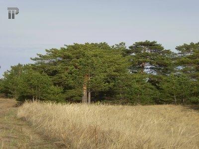Верховный суд отложил решение по делу об аренде иркутского леса