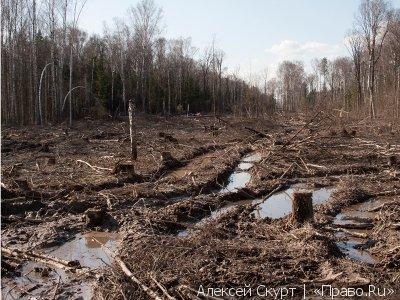 Госдума одобрила в двух чтениях закон о создании лесопарков около мегаполисов